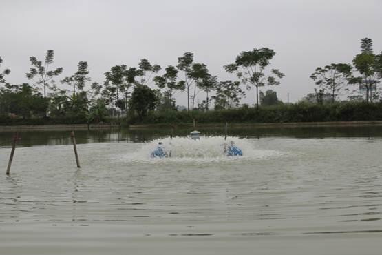 Chủ động phòng chống nắng nóng cho thủy sản nuôi